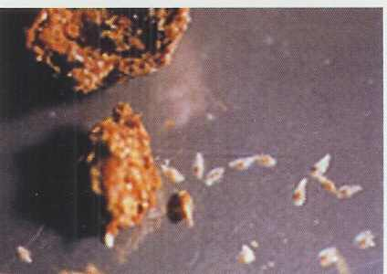Was Tun Gegen Bandwurm Seite 6 Medde Gesundheit Krankheiten